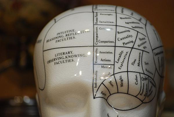Phrenology Head Crackled porcelain